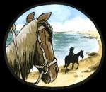 cheval_plage 2.jpg